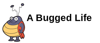 Image result for A BUGGED LIFE.